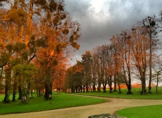 Hale Park drive at sunset